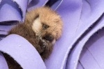 Tiny little ball of fur!